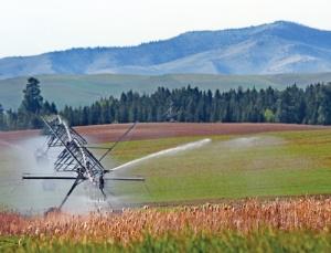 irrigationline